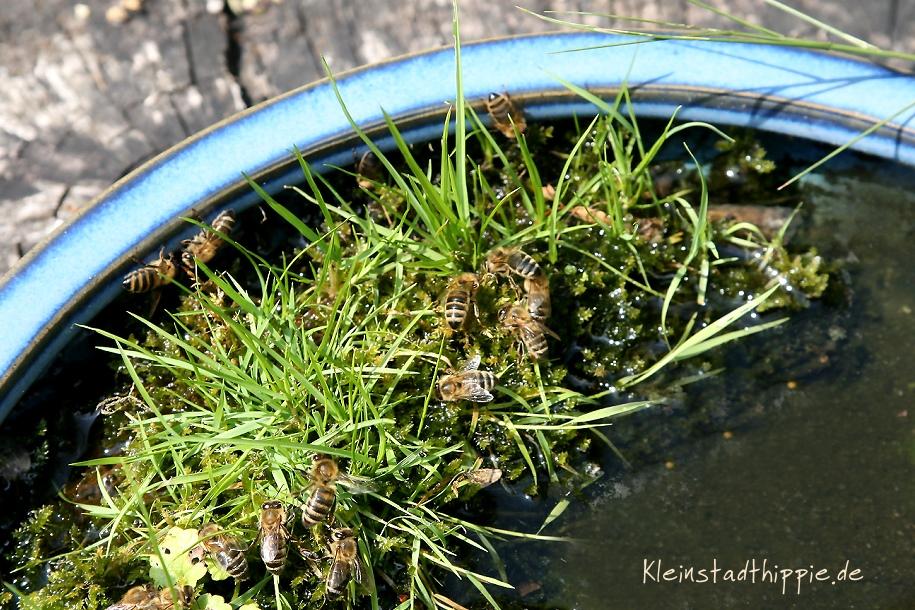Bienen-Tränke von Kleinstadthippie vegan Food Blog Bienen brauchen im Sommer unbedingt Wasser!