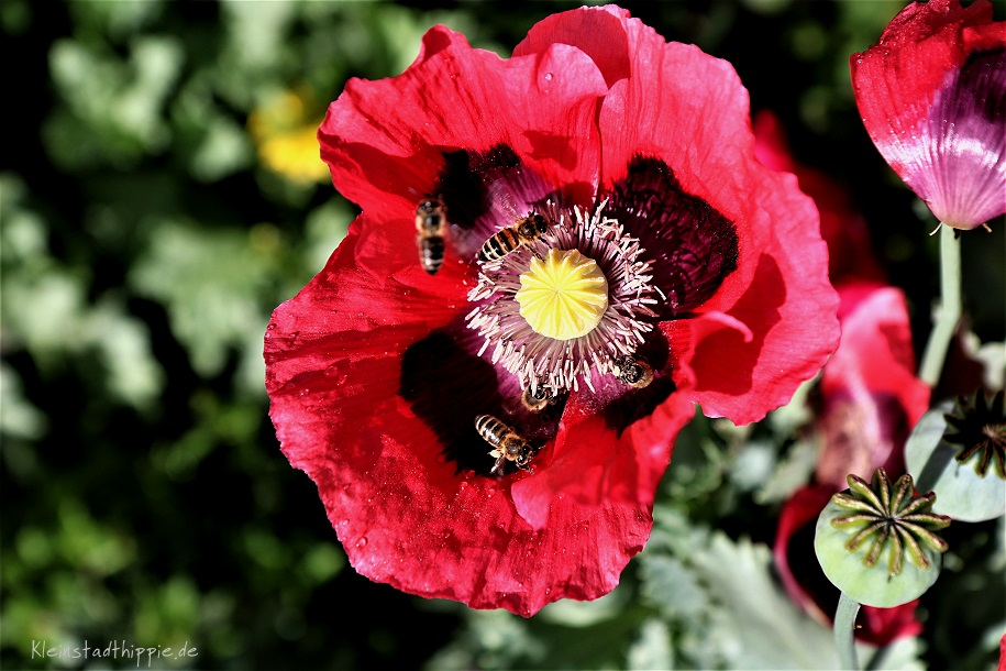 Bienen-Tränke Bienenfreundlicher Garten