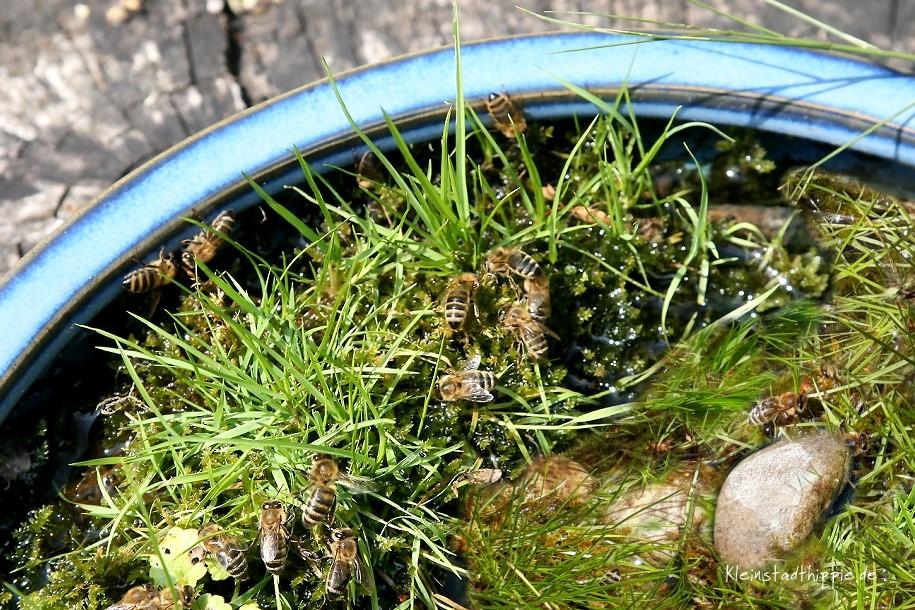 Bienen-Tränke Bienentränke ohne Murmeln - mit Steinen und Gras