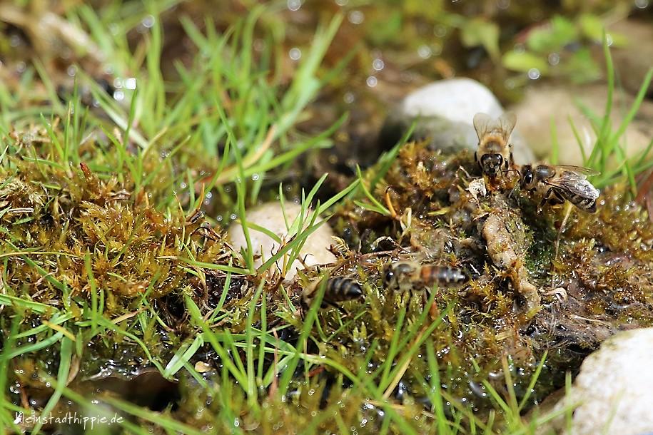 Bienentränke ohne Murmeln - mit Steinen und Gras